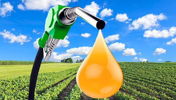 O biodiesel é feito de óleos vegetais